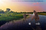 Audition:::EquineGraphics:::Manip by makian-feathers