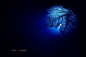 Blue leaf in the water by TheLevenCreations