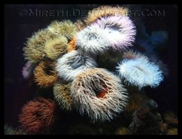 Forest of Anemones by Mireth