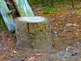 Stump Stock by stormymay888