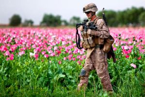 Poppy by MilitaryPhotos