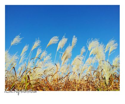 Autumn in Seoul - Of reeds and sky by LaCrymaMosa
