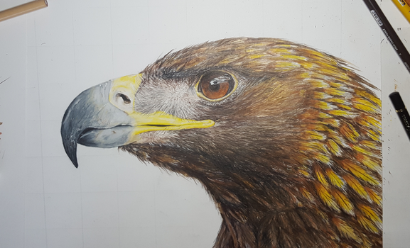 Golden eagle by LuDrAwn