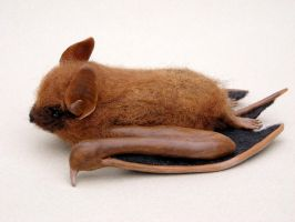 Eastern Pipistrelle bat brooch 2 by creturfetur