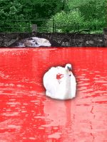 Blood Swan by the-black-wolf-co-uk