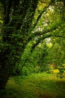 Nature background 16 by elanordh-stock