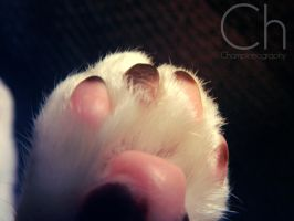 Paw by Champineography