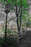 lantern in park by immerblind