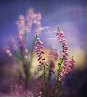 Forest HeatheR vol.2 by Justine1985