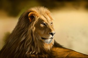 Study: Lion by PVproject