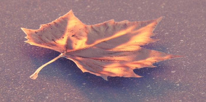 Leaf by per-spective