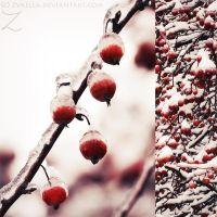 .:fruits of winter:. by zvaella