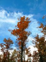 Fall Leaves Against Blue Sky by jldyr