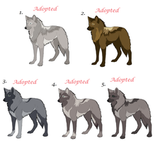 Realistic wolf Adoptables 008 by AimiTheSeawolf