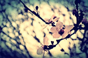 Decayed Blossoms by DevyIzzy