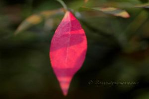 The Red Leaf by Baary