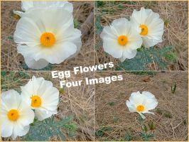 Patagonia Egg Flowers by Spiteful-Pie-Stock