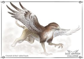 Gryphon Challenge 11 : Cheetah and Red tailed hawk by GaiasAngel