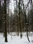 Stock Image - Wintry Forest - 02 by Life-For-Sale