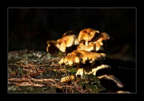 Fungi 2 by ColetasSoft