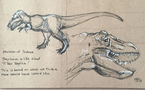 T - Rex Studies by Waterbear