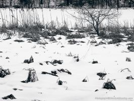 Snow on Frozen Lake by KBeezie