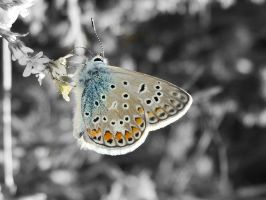 butterfly by olsy72