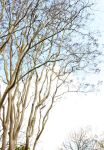 Branches stock by CathleenTarawhiti