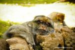 Monkey by Fotogenia