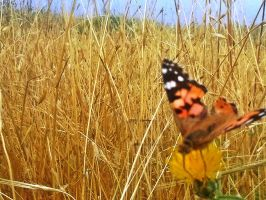 butterfly by shults