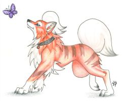 Fang the Red Growlithe by CaptainMorwen