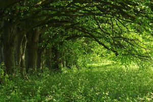 Row of Horse chestnut by MaX-DooM