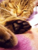 Cats Paw by JessicaNarelle