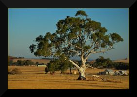 Gum Tree by Wytch1
