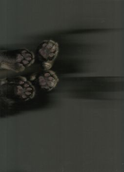 Polydactyl Cat Scan by Angelwyng