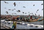Fishing In Gambia by SnapperRod
