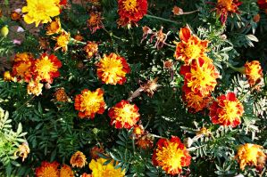 yellow red flowers by ANDMAiYESi1986