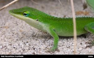 Lizard on a Rocky Surface 04 by phantompanther