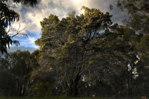 The Dreaming Tree by CorporalNobbs
