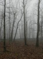 foggy forest bg4 by wroquephotography