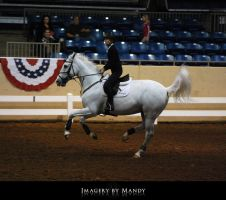 Gray Canter (2) by aipstock