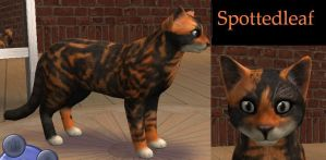 Warriors Ref - Spottedleaf by rebelwolfchris