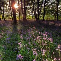 Bluebell Sunset by danUK86
