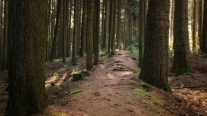 My Path by jant-photo