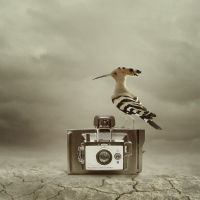 Each camera has own bird II by AmandineVanRay