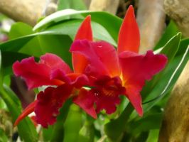 Orchid Series 6 by Formel