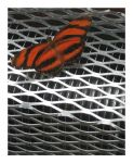 Orange Tiger Butterfly by juja