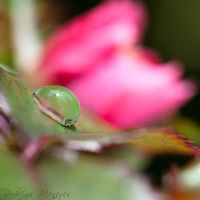 Green Crystal by ironmanbr
