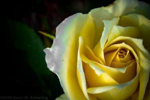Color Me Yellow by g2k556