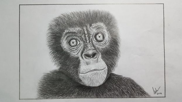Sketch of an Ape by melvinologic